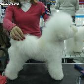 Hardy Flap's U Got The Look на International Dog Show CACIB-FCI Russia 2011