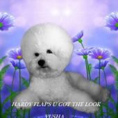Hardy-Flap's U Got The Look